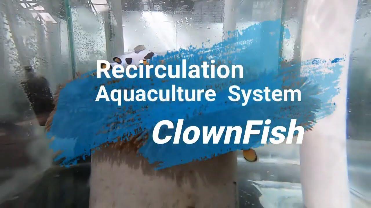 Resirkulasi Akuakultur Sistem (RAS) Skala Rumah Tangga untuk Membesarkan Ikan Hias Clownfish.