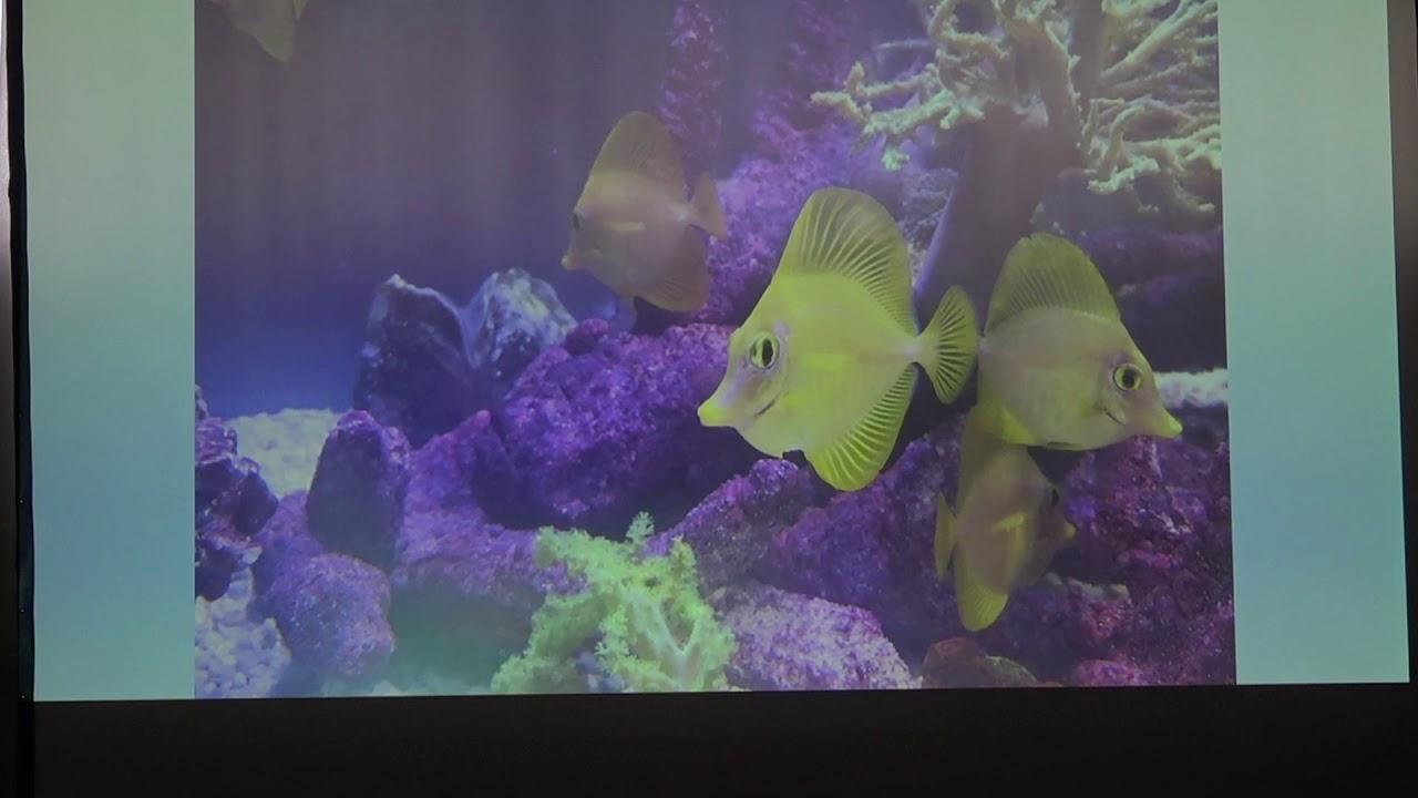 Fisch&Reptil: Vortrag Überblick zu Meerwasserfisch Nachzuchten für die Aquaristik von Daniel Heerz