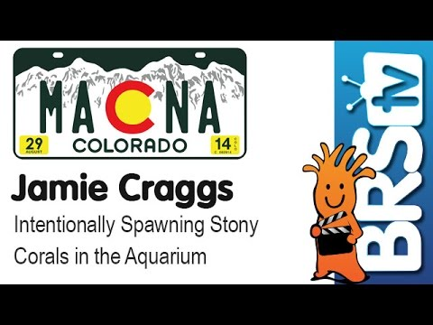 Intentionally spawning stony corals in the aquarium by Jamie Craggs | MACNA 2014